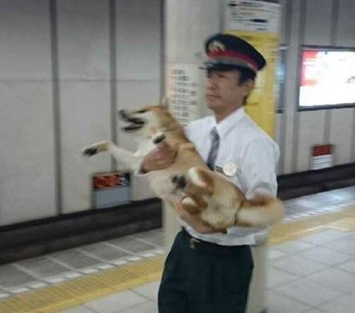 韓国の反応:「これはとても微笑ましいですねw」→「日本の駅で目撃されたこの光景が可愛らしいと話題にw」