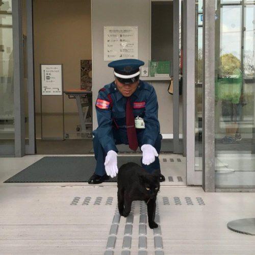 韓国の反応:「日本で話題になっている警備員と猫の攻防が面白すぎるんだがwww」→「これは平和な光景ですねww」