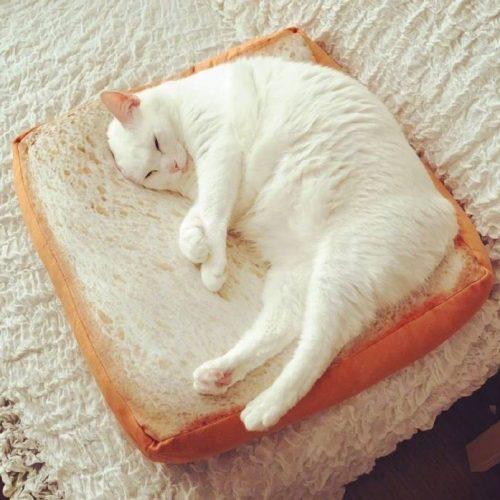 韓国の反応:「食パンクッションをふみふみする日本のネコが可愛すぎるんだがwww」→「気持ち良さそうな表情がたまりませんねww」